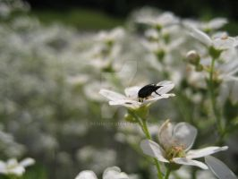 insekter XIII by pemmi