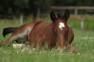 Foal stock 132 by Bundy-Stock