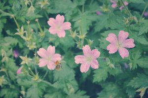 Flowers and Bee by perdita00