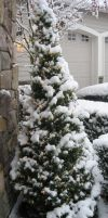 Snow Covered Tree by GreenEyezz-stock