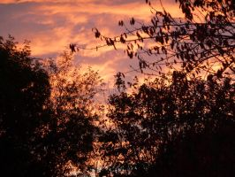 Saturday Evening from Bedroom Window 5 by SrTw