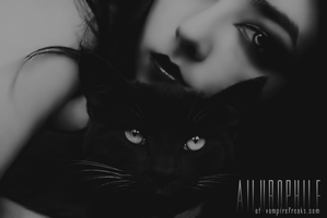 Ailurophile Layout Header by AllTimeScream