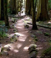 Rocky Trail by katherineannecarlson