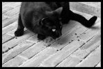 Black Cat in Assisi by Horsewoman2012