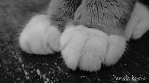 Paws by zaranix
