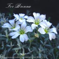 For Brenna by Sisterslaughter165