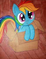 Little Dashie in a Box by VladimirWiktor