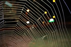 Bokeh Spiderweb by AlexReedWhite