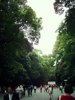 Meiji Jingu Shinto Shrine 3 by Akiso