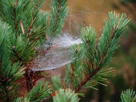 Early morning webs by piglet365