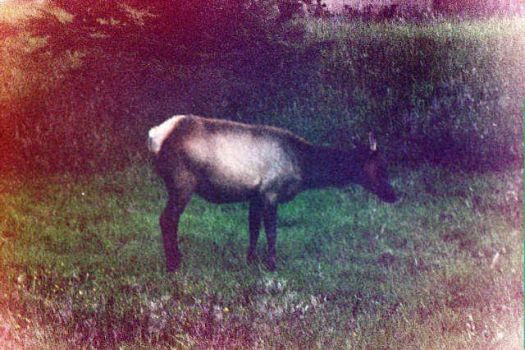 The Tale of..The Old Style Elk by themetrosexual