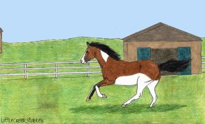 Wes- Adoption Application by LittleCreekStables