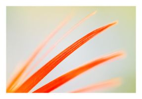 Feather. by Jack070