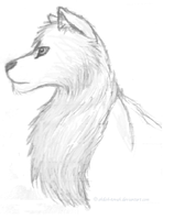 Canine Sketch by Shiloh-Tovah