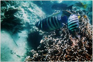 Reef fish 2 by wildplaces