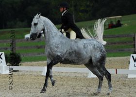 grey removed tack by suuslovertje