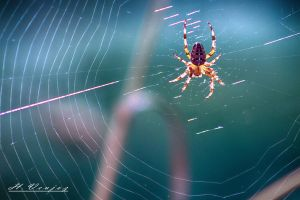 Spider4 by hubert61