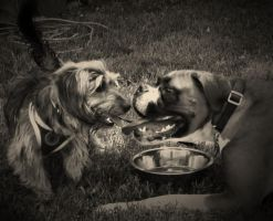 Gus and Charlie II by ForcedReaction