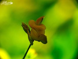 Yellow flover by killswitch90