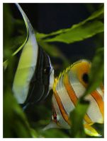 Stripes come into fashion by art4oceans