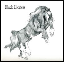 CH Black Lioness by Everland-Stables