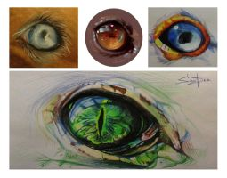 Eyes by SalamanDra-S