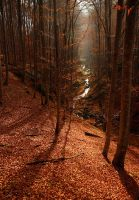 red forest III by adypetrisor
