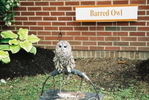 Bird 10 -barred owl- by Catt22489