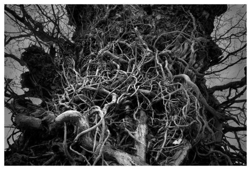 Root Tree by littledesignshop
