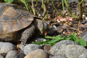 turtles PANZER^^ 6 by TITIone67