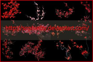 PNG plum blossom flowers stock by Sophie-Y