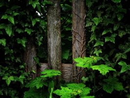 overgrown by awjay