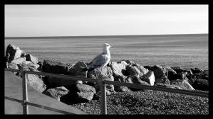 The Seagull on the Railing by badblokebob