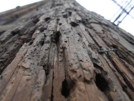 Wood Rot Detail by cdooginz