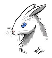 rabbit by jessielp89