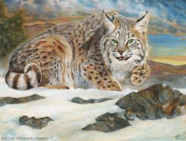 Canadian Lynx by FrancescaBaerald