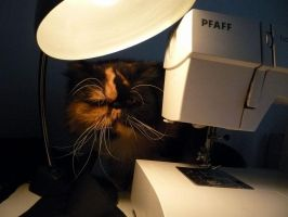cat at work by falketta