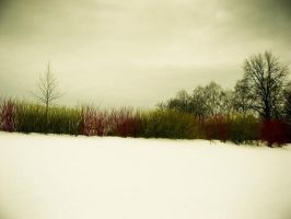Winter colours by mila2boo