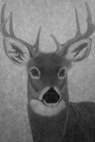 DEER by sinsenor