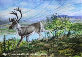 ACEO: Winds, guide me by Tuonenkalla