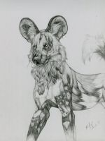 African Wild Dog by PadfootBrush