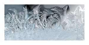 forest of ice by marianus