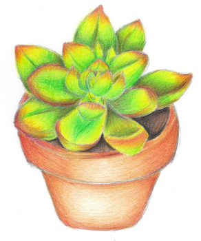 Succulent Plant by VideoGameLover15