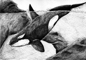 Diving Orca in Ink by SyKoticOrKa