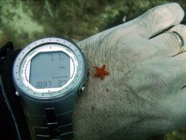Worlds smallest starfish? by Akamasdiver