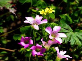 Lil Wild Flowers by Sharondipity