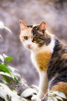 Italy_Cat by Sv-Batalina