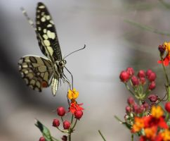 Butterfly in the Gorge by tweedale23