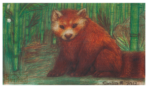 Red Panda by Smushey