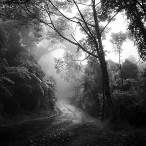 tropical Forest by Hengki24
